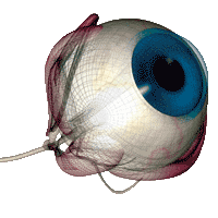 Agopuntura-oculistica-Bologna